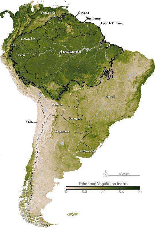 偃师森林半岛地图